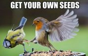 cropped-get-your-own-seeds.jpg